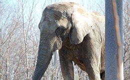 Mientras tanto en Rusia… un elefante pasea por Moscú