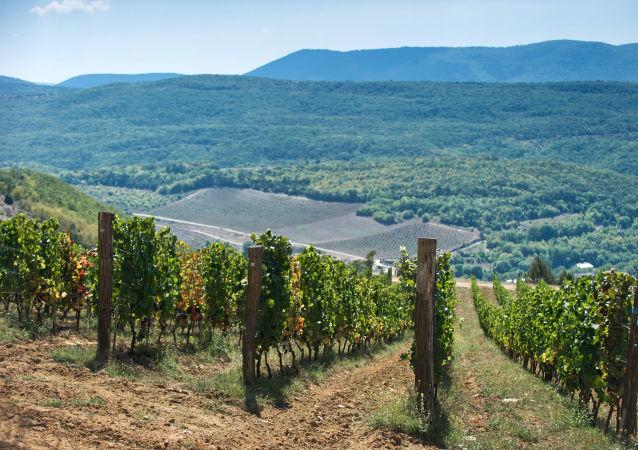 La milenaria tradición vinícola de Crimea