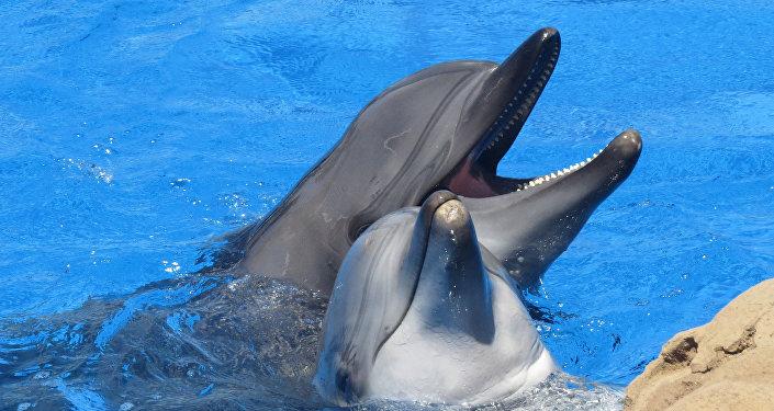 Los delfines (archivo)