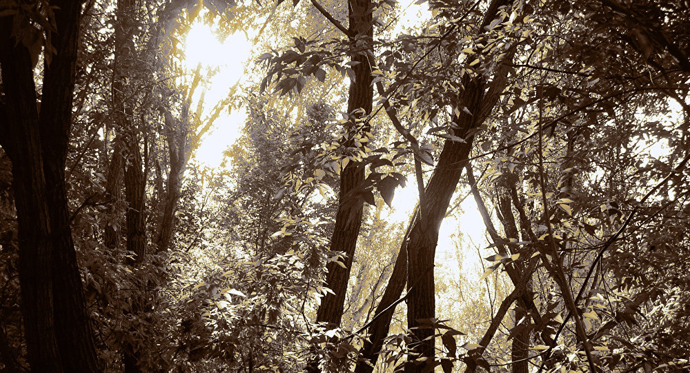 Selva (imagen referencial)