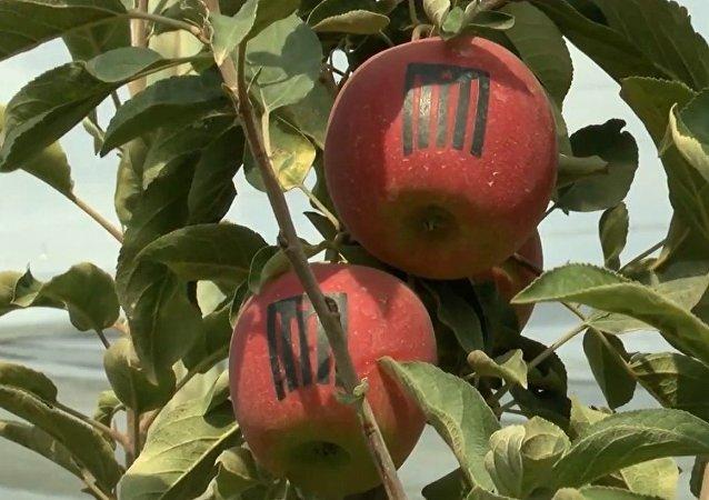 Manzanas patrióticas