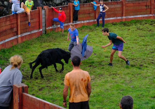 Sin sangre ni dolor. Las corridas de toros portuguesas en todo su esplendor