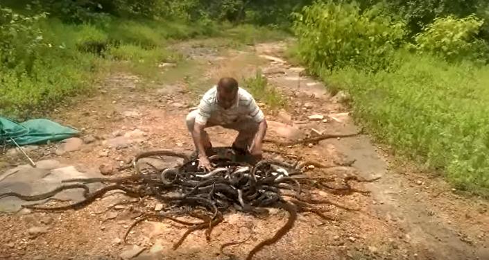 El cazador de serpientes indio durante el trabajo (captura de pantalla)