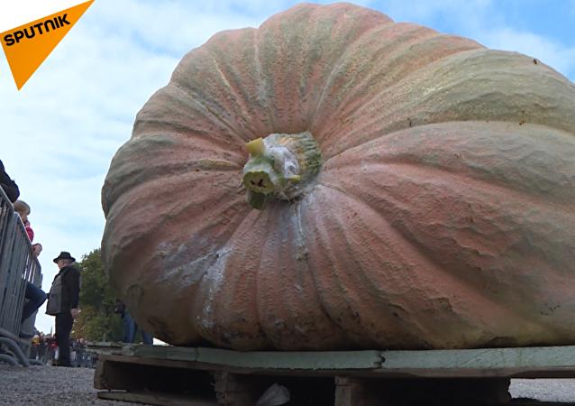 La calabaza más grande del mundo