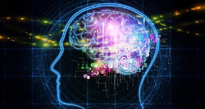 El cerebro (ilustración)