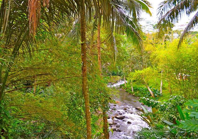 Las junglas de Indonesia