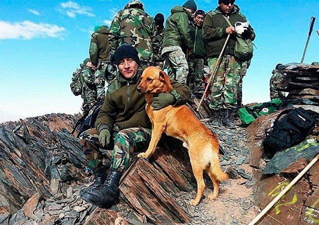 Ejército de Argentina asciende a sargento a un perro