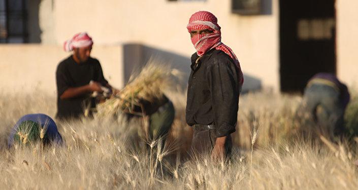 La cosecha del trigo (Archivo)
