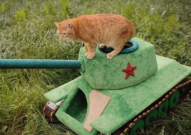 Tanque-casa para gatos