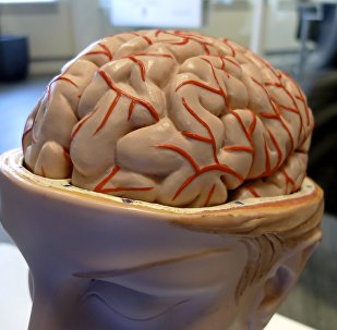 Cerebro (archivo)