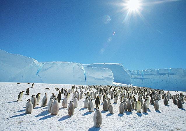 Una colonia de pingüinos en las proximidades de la estación Mirny en la Antártida.