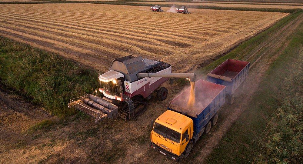 La cosecha de arroz en los campos de la empresa rusa Nacional el la región de Krasnodar