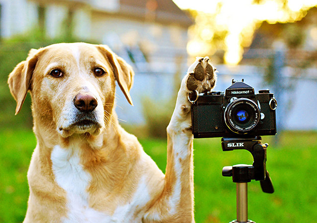 A dog and a camera