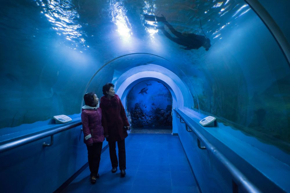 Los visitantes del zoológico central de Pyongyang, en un túnel subacuático del acuario local