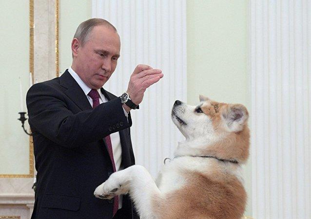 El presidente ruso Vladímir Putin con su perra Yume de la raza akita inu, antes de la entrevista en el Kremlin con el canal de televisión Nippon y el diario Yomiuri en la víspera de su visita oficial a Japón
