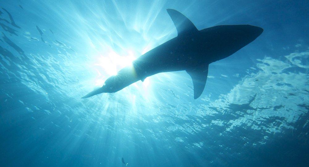 Interceptaron en Chile dos pesqueros peruanos con carga de tiburones