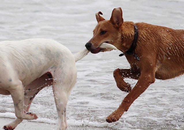 Perros corren en la playa