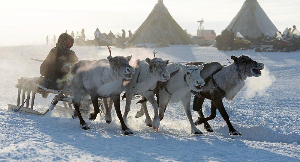 Los pastores de ciervos en la Comarca Autónoma de Yamalo-Nenets