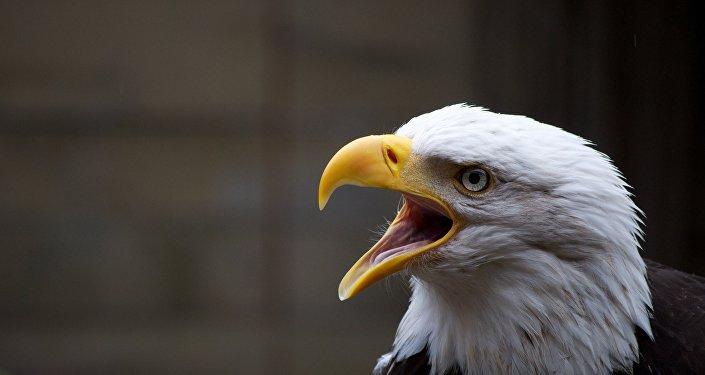 Una águila