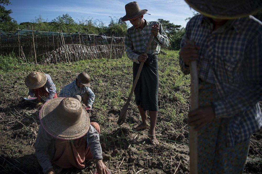 Trabajadores de la granja en Myanmar