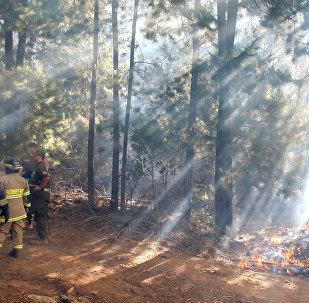 Los incendios forestales en Chile