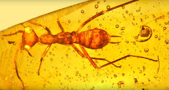 Insecto prehistórico Aethiocarenus burmanicus