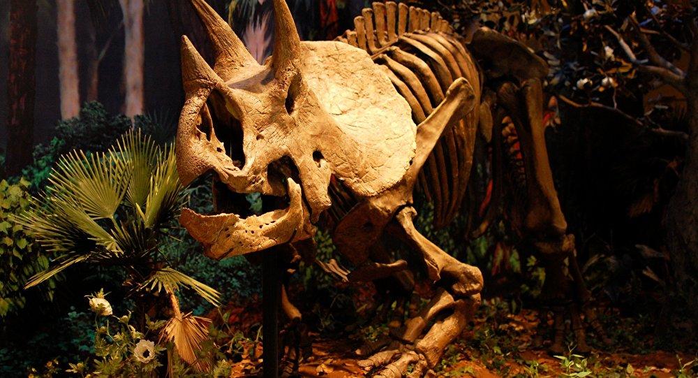 El esqueleto de un dinosaurio (Archivo)