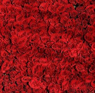 Rosas (imagen referencial)