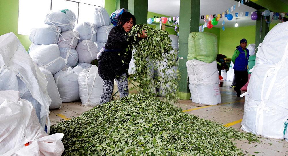 Las hojas de coca en el mercado en La Paz