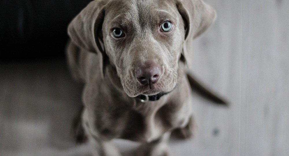 Un perro (archivo)