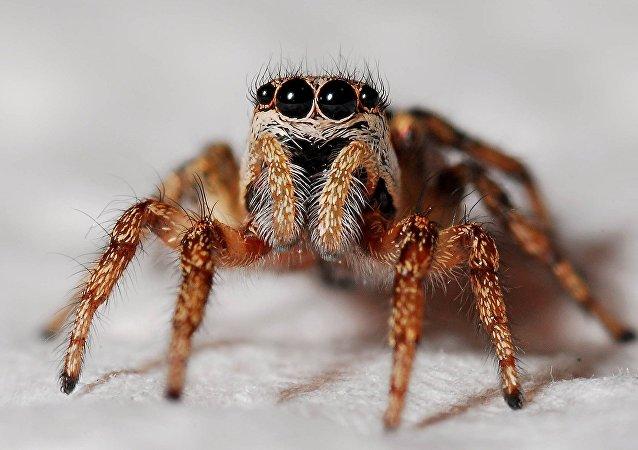Una araña (archivo)