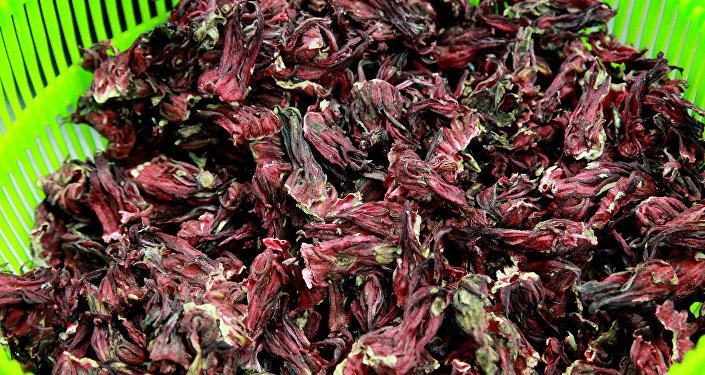 """Jamaica, una """"súper flor"""" contra las bacterias multirresistentes"""