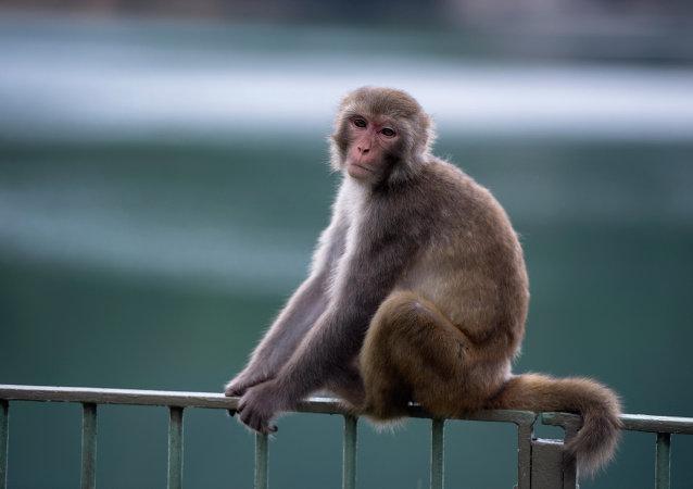 'Mowgli' moderna: hallan a niña criada por monos en la India (fotos)