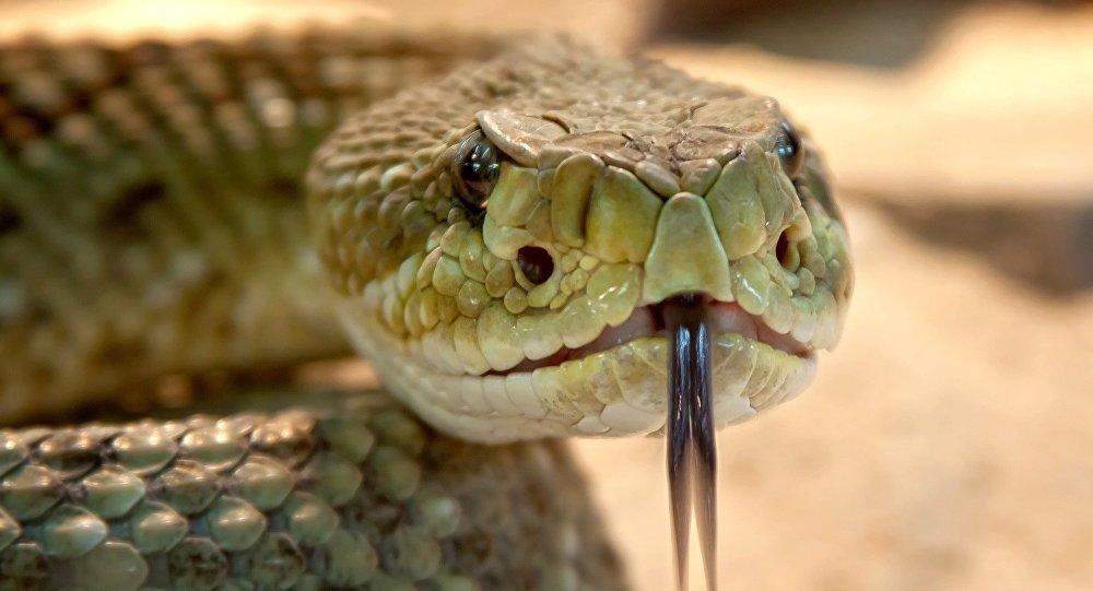 Una serpiente