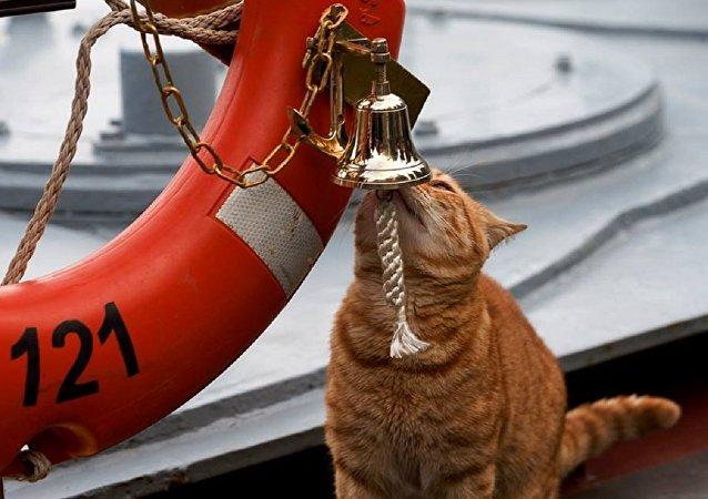 El gato del Ministerio de Defensa ruso