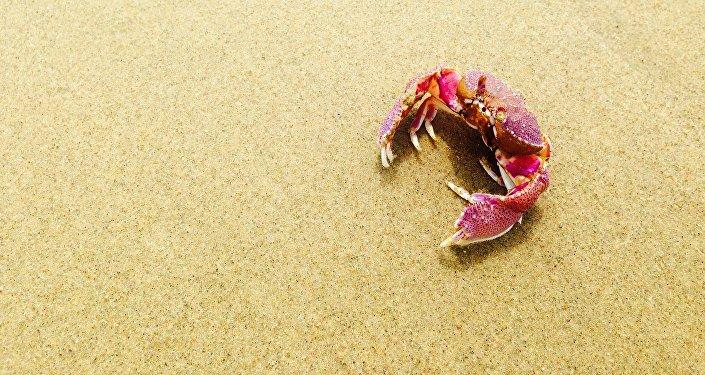 Un cangrejo (imagen referencial de crustáceos)
