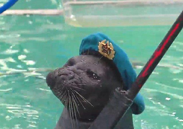 Una foca rusa