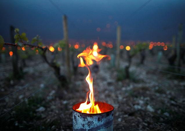 El fuego protege los viñedos del frío, Chablis, Francia