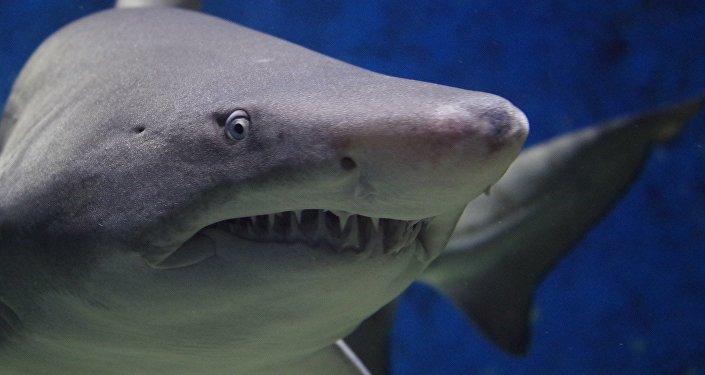 Vídeo: tiburón muerde la pierna de un pescador imprudente