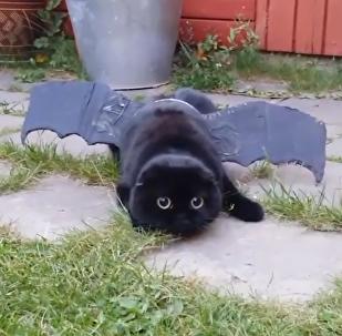 Inusual apariencia de felino conquista las redes