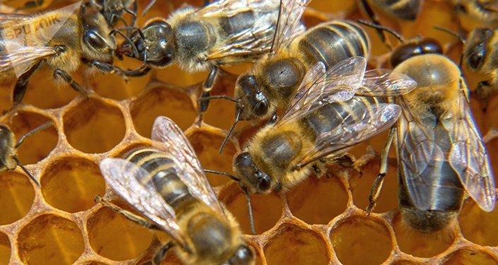 Una colmena de abejas (imagen referencial)