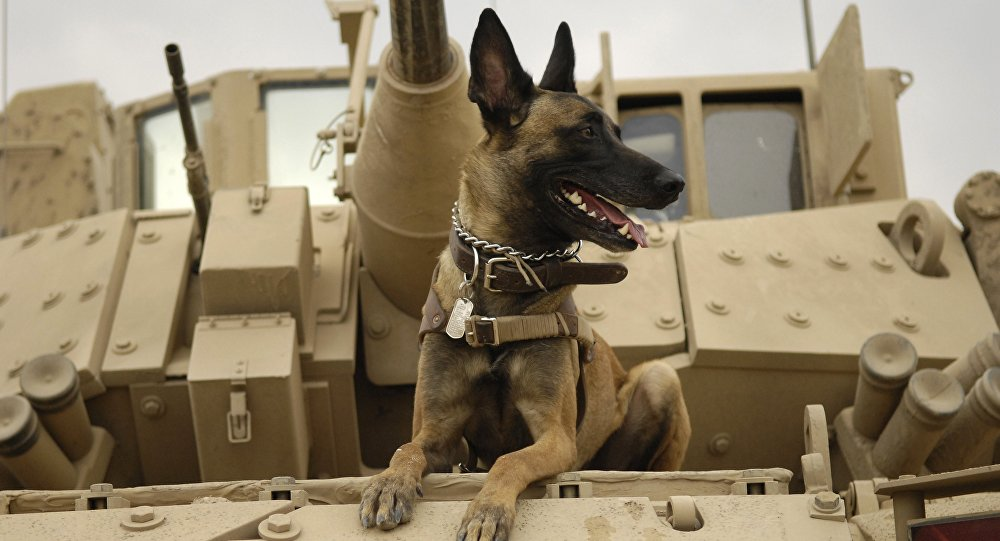 Un perro en el tanque
