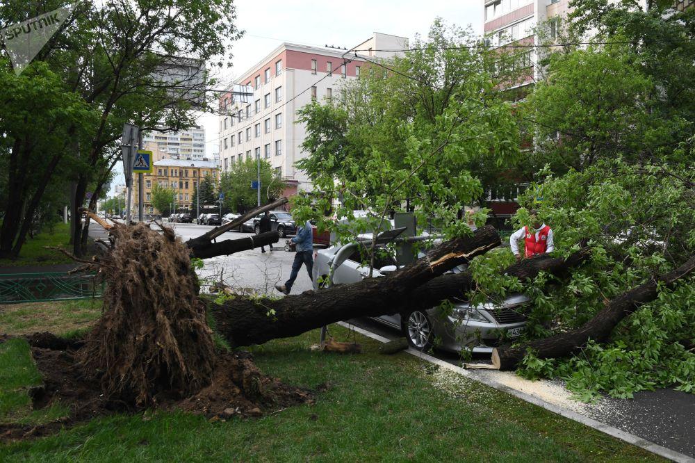 Un árbol caído a causa de la tormenta en Moscú