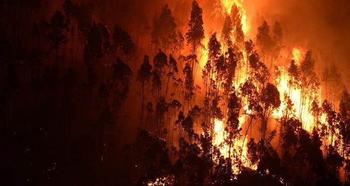 Portugal en llamas: duelo nacional por las víctimas de los incendios forestales