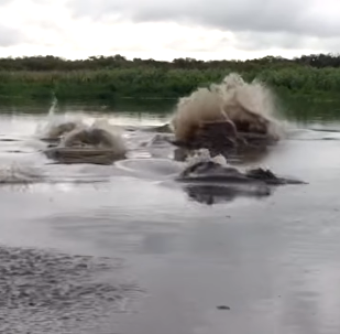 El río Saint John (Florida)