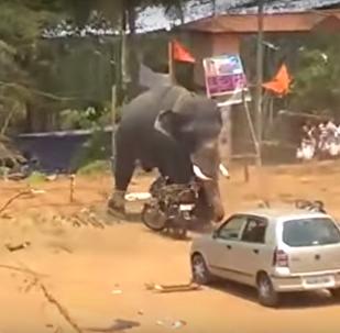 Un elefante enfurecido arma un lío en la India