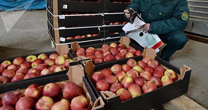 Un empleado del servicio de aduanas ruso analiza las manzanas importadas rumbo a Kazajistán