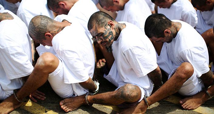 Miembros arrestados de la pandilla Mara Salvatrucha