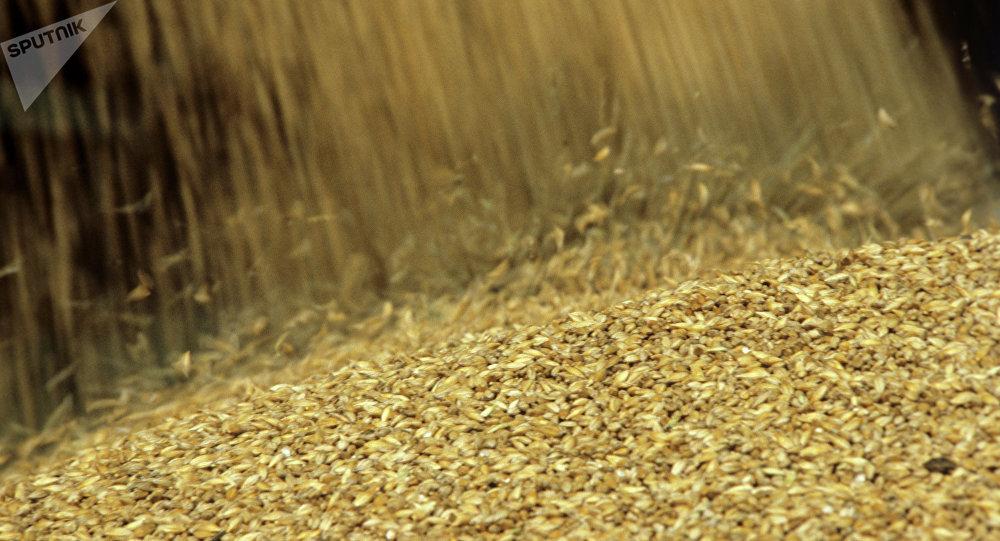 Cosecha de grano (imagen referencial)