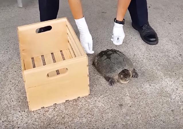 ¡Quita tus manos de mí! Una tortuga ninja se enfrenta a un policía